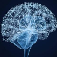 Image of a digital brain