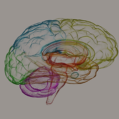 Illustration of a human brain in lots of colours