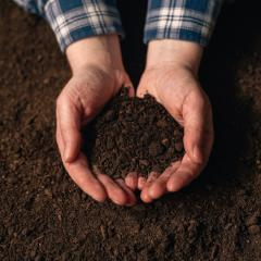 An image of hands holding soil